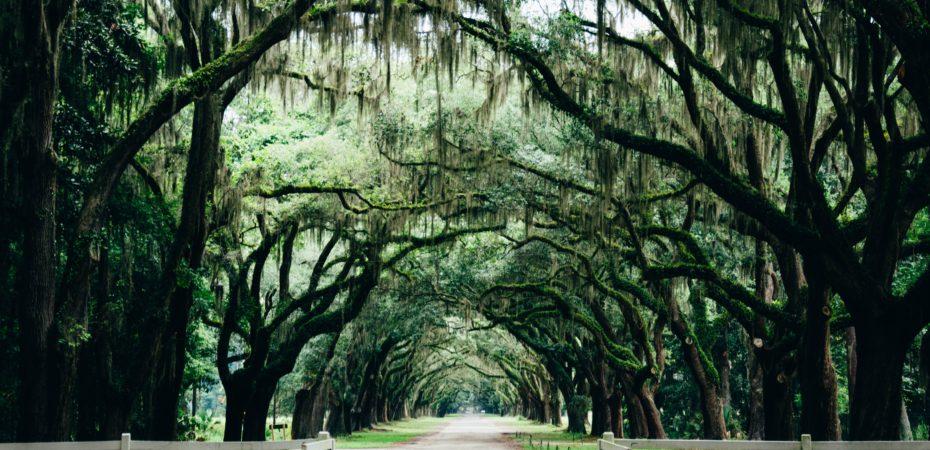 Call It Adventure • Savannah
